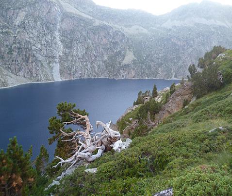 Pins au-dessus de la rive droite du lac de Cap de Long