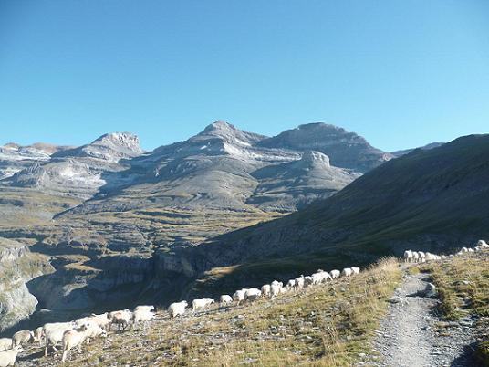 En allant vers le collado Superior de Goriz ou Collata de Arrablo, je ne suis pas seul, il y a un troupeau de brebis et las Tres Sorores