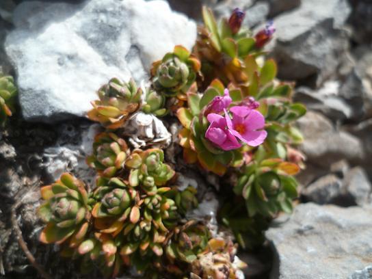 Fleur en remontant vers la Punta de las Olas