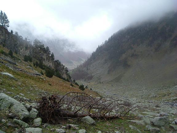 A la descente, l un des nombreux arbres arrachés par la tempête
