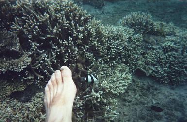 Quel plaisir pour les pieds, les plonger dans l'Océan Indien 3071 mètres plus bas