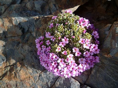 Fleurs près du sommet du Piton Carré