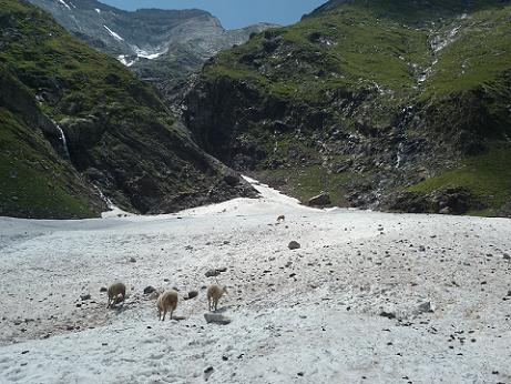 Dans la descente, passage au Pont de neige, les moutons y ont la laine fraîche