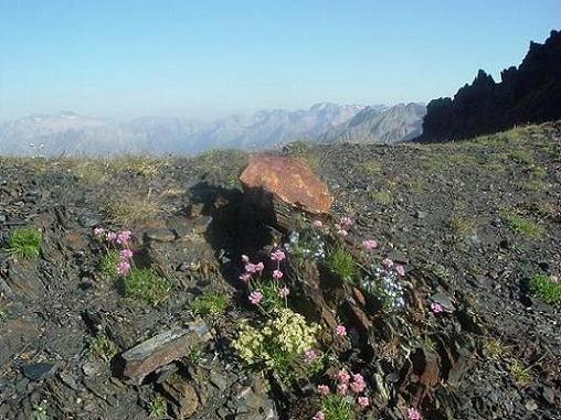 Un bouquet de fleurs pour l arrivée au collado de Llauset 2865 m