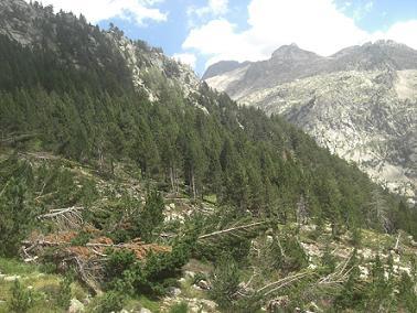 Passage près d`une zone de sapins victimes d`une avalanche